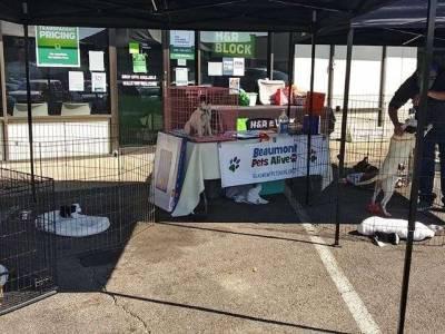 Beaumont Pets Alive: 'No Empty Bowl' drive @ Crossroads